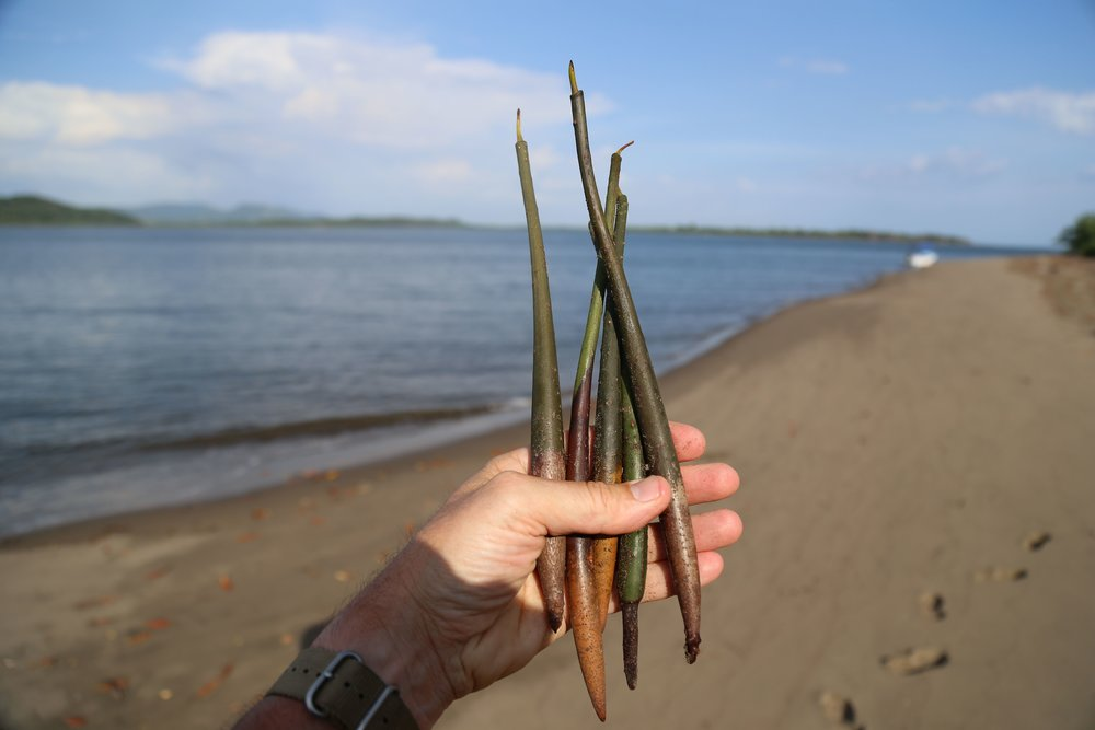 Day 4: Today will focus on mangroves. In the morning, participate in a reforestation program planting new mangrove seeds.
