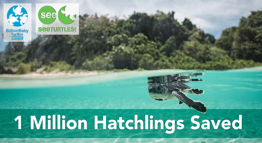 Read our Million Hatchlings Report