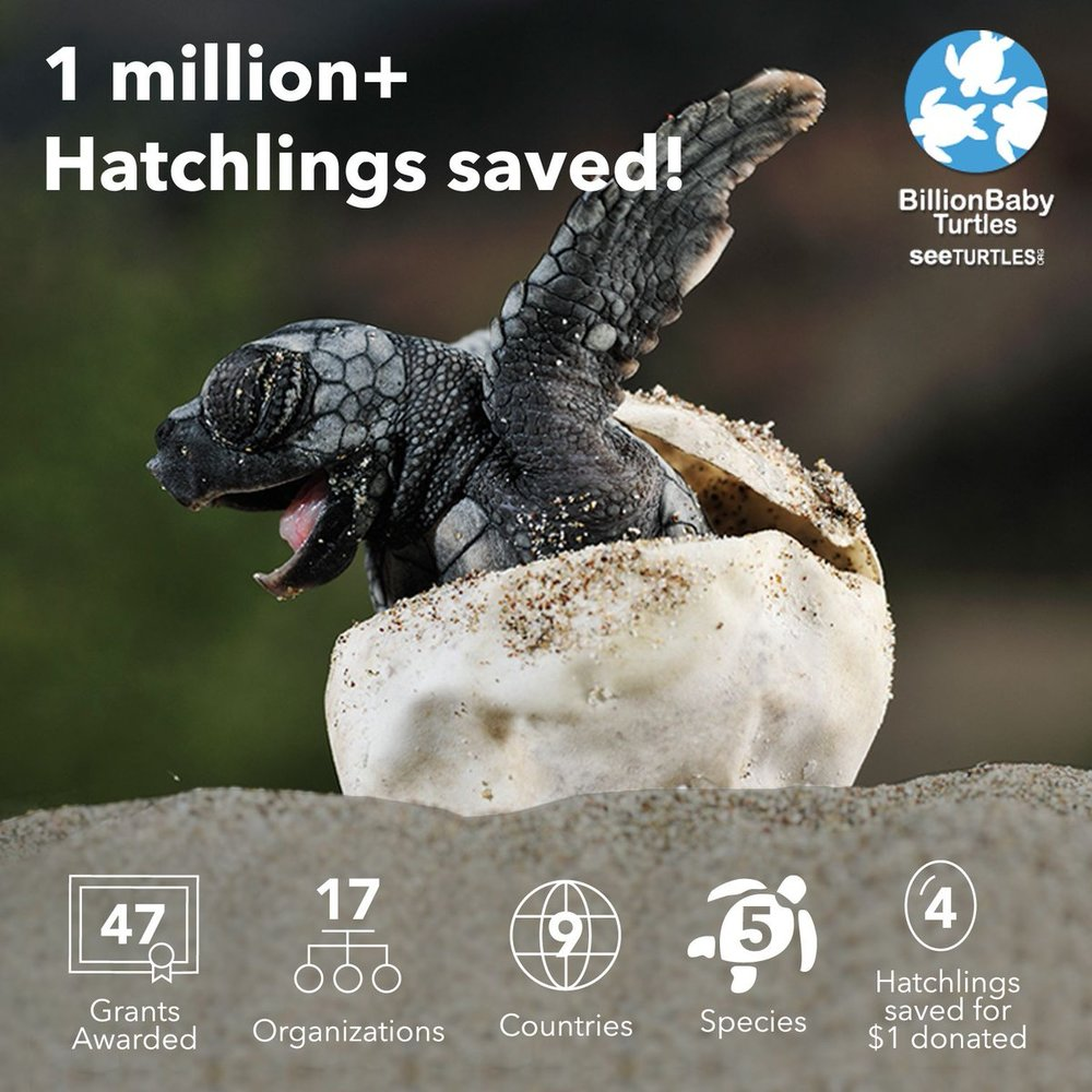 Million Hatchlings.jpg
