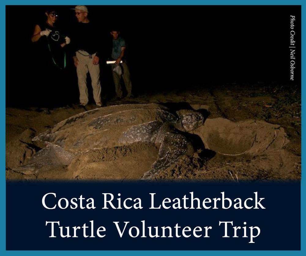 Costa Rica Leatherbacks.png