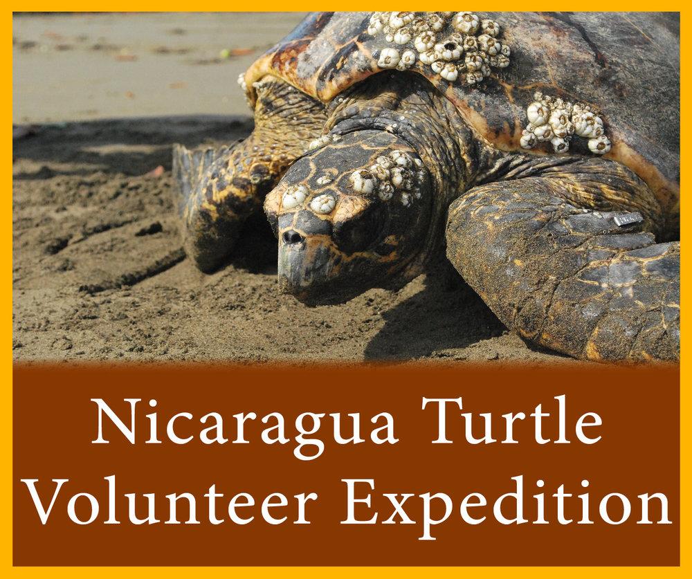 Nicaragua Hawksbill.jpg