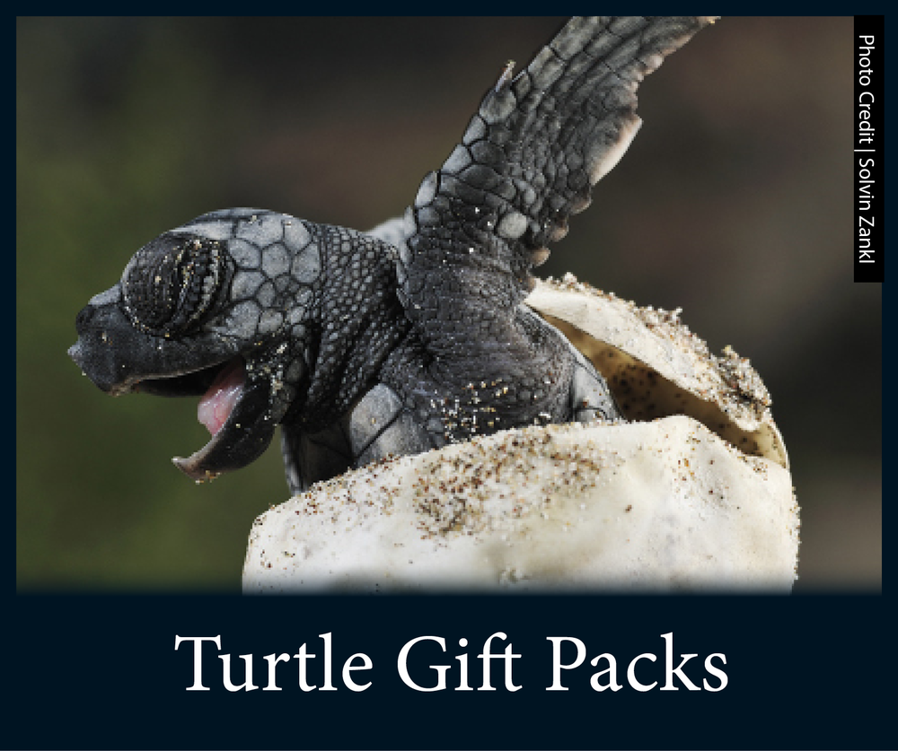 BBT Store - Gift Packs.png