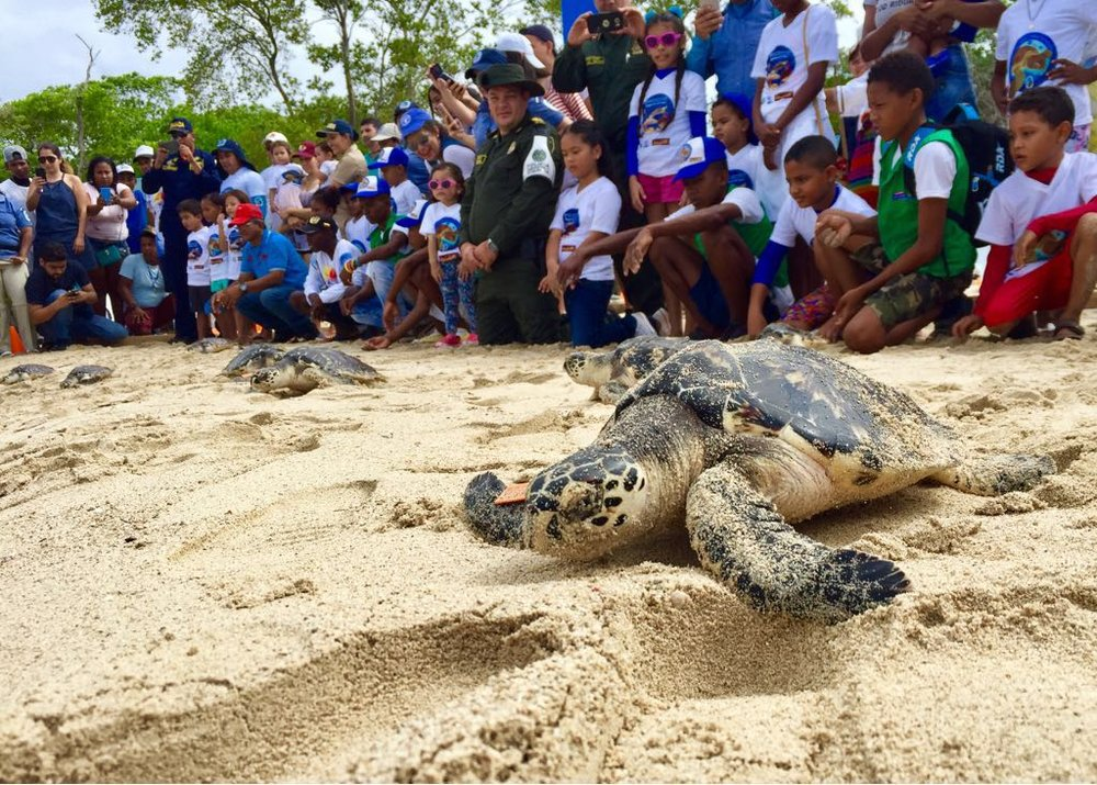 Punta Faro has a great program that pays fishermen to save turtles and then local kids release them to the water