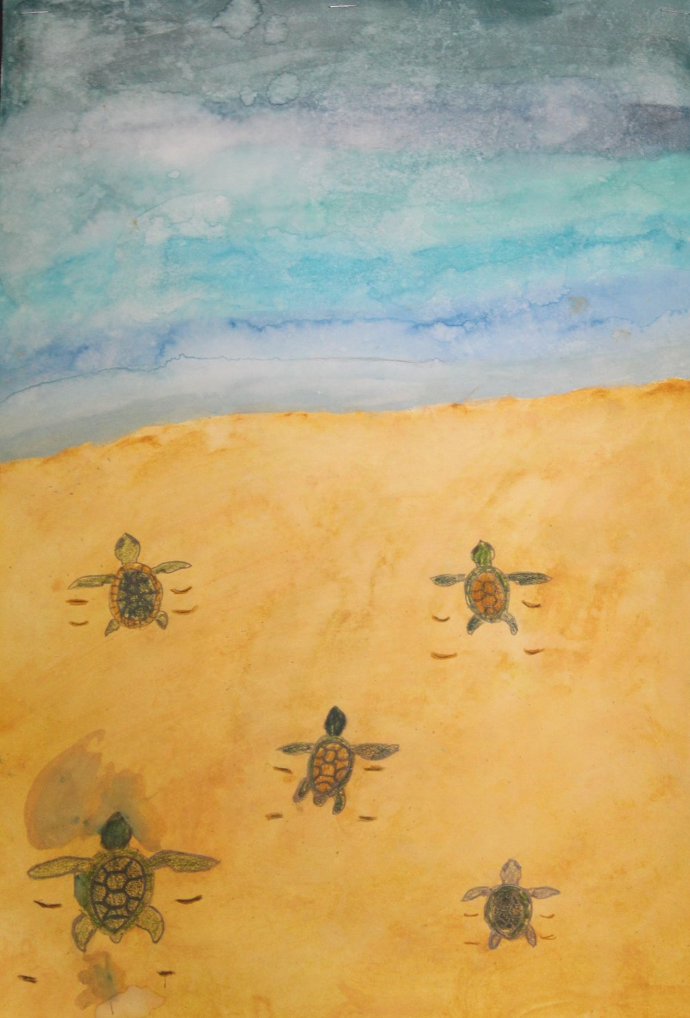Turtle Hatchlings watercolor and colored pencil.JPG