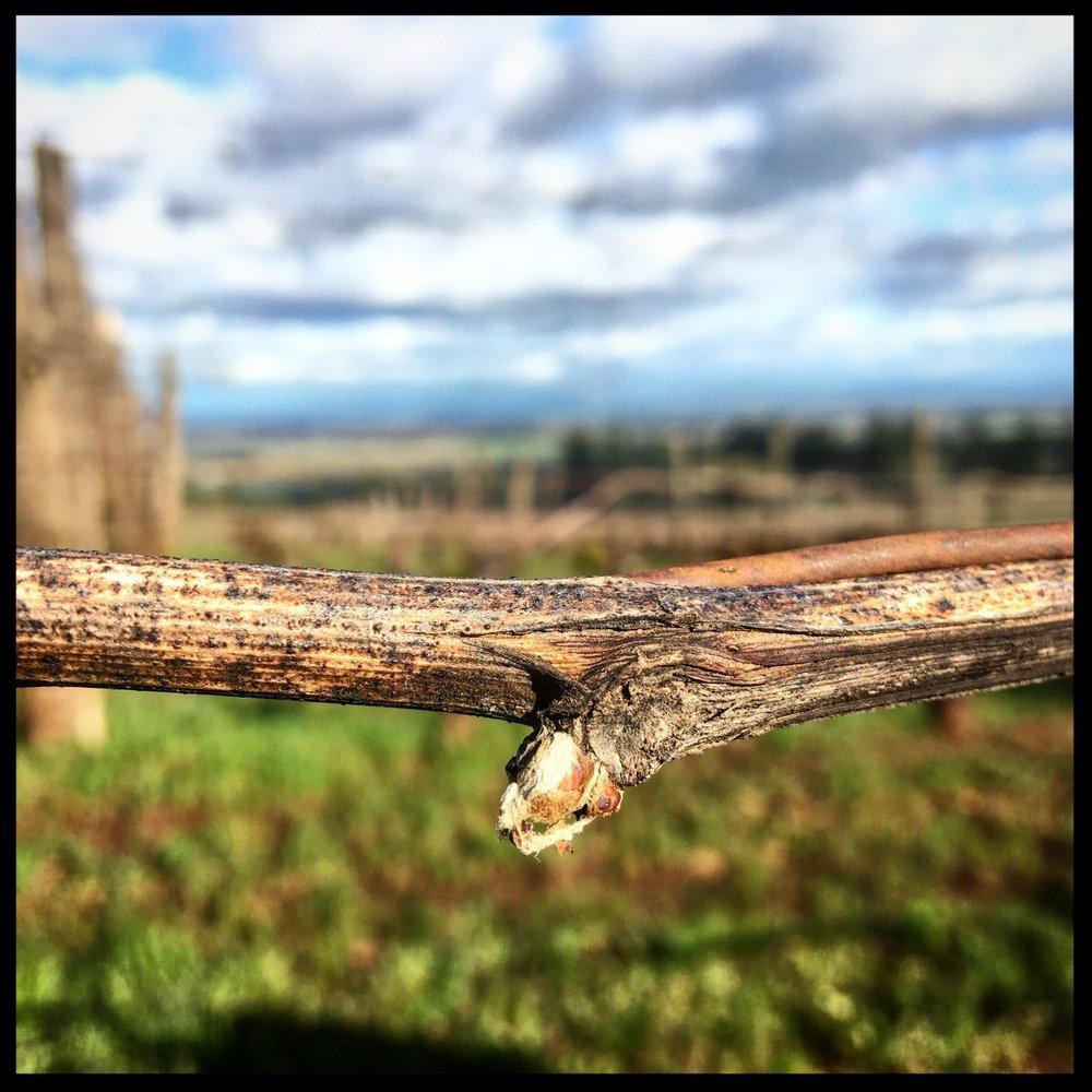 Photo taken at Brooks Winery