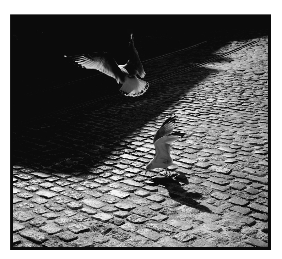 Birds-2 frame.jpg