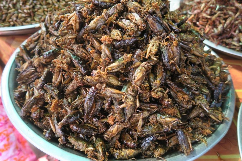fried-insects-cambodia8.jpg