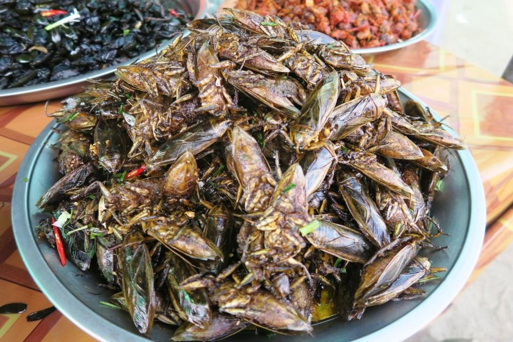 fried-insects-cambodia6.jpg