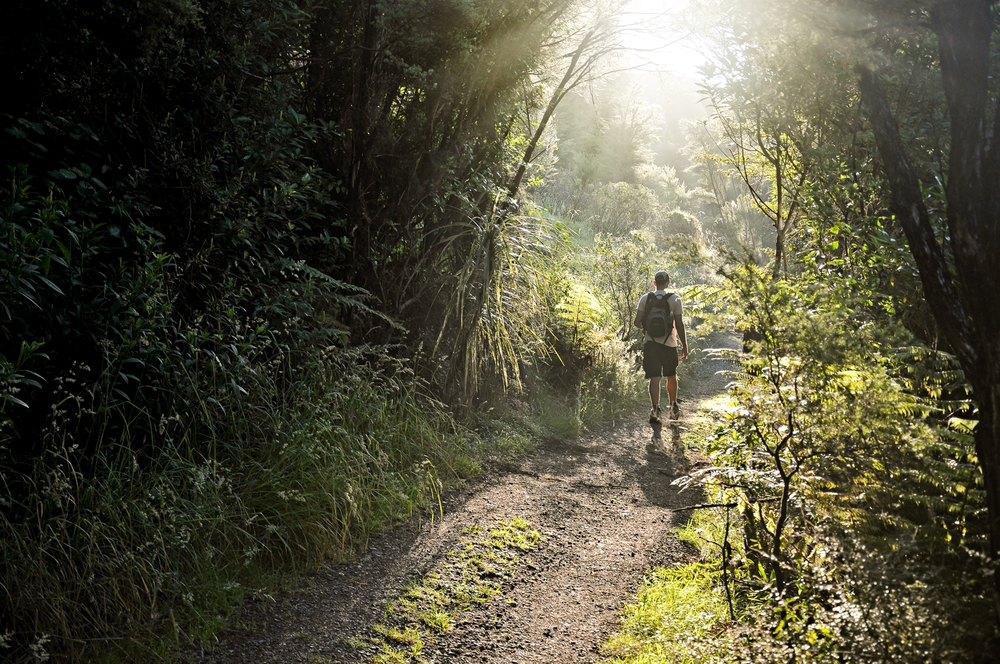 Go for walks amongst pristine native bush