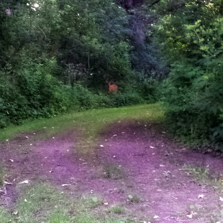This doe would only pose at a distance. :)