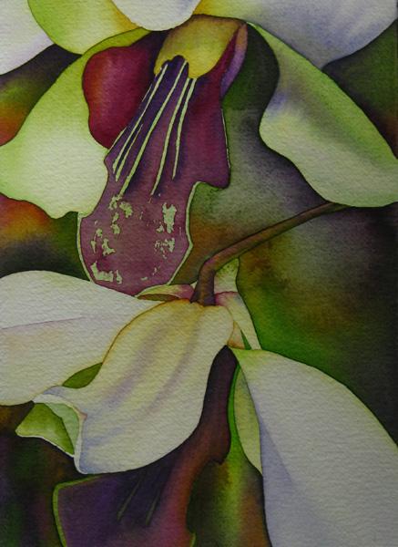 Kauai Orchids