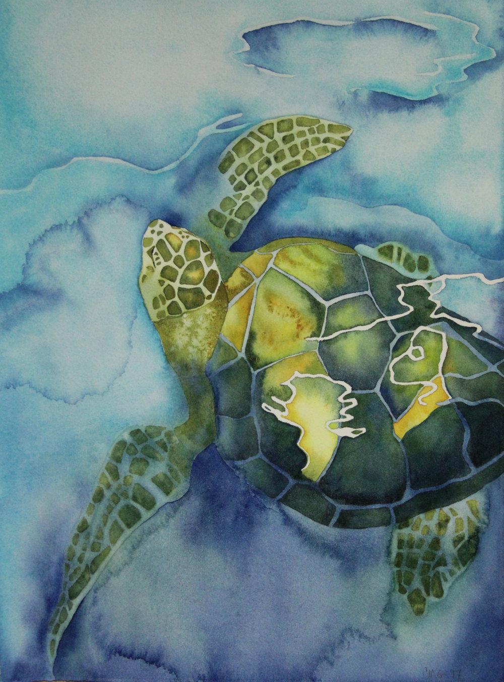 Mexico Sea Turtle
