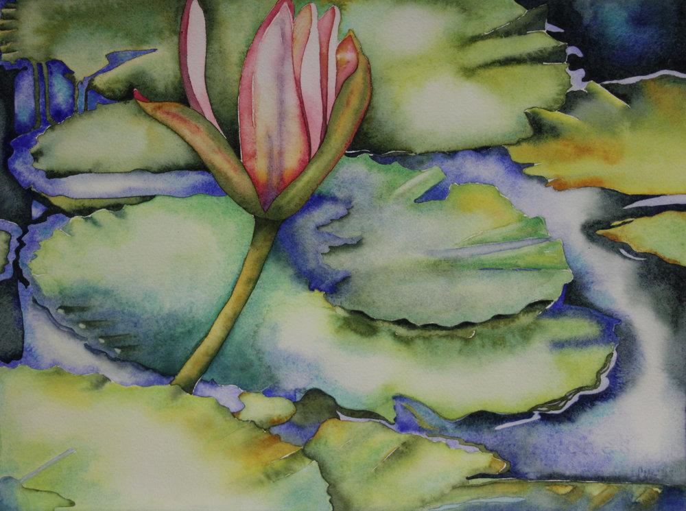 Hawaiian Water Lily I