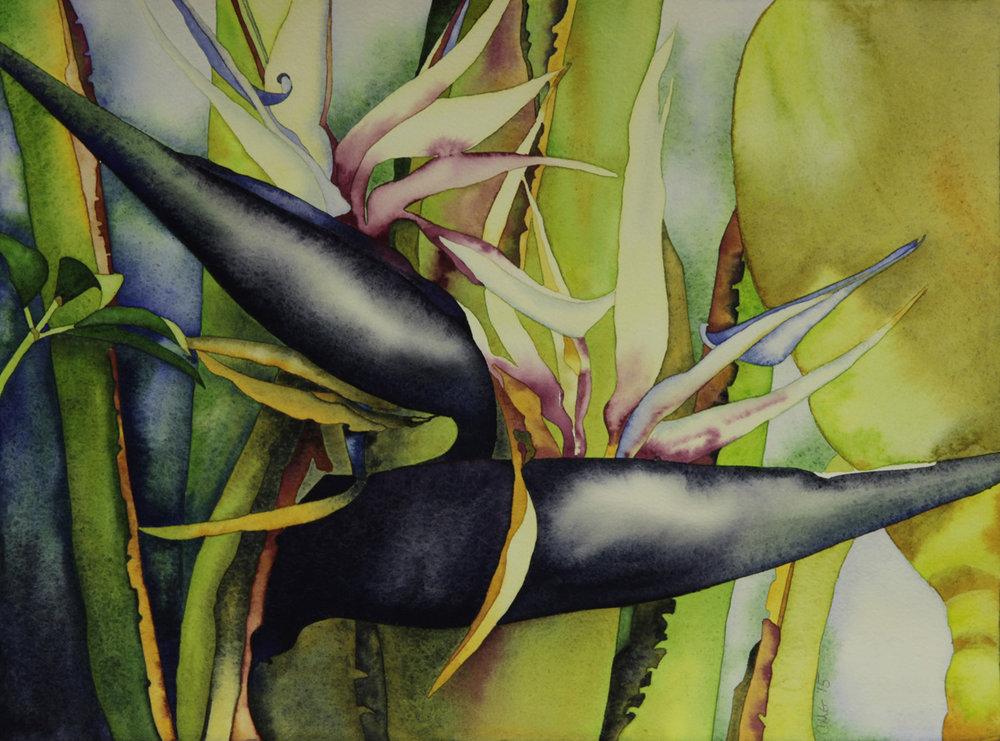Tropical Watercolors -
