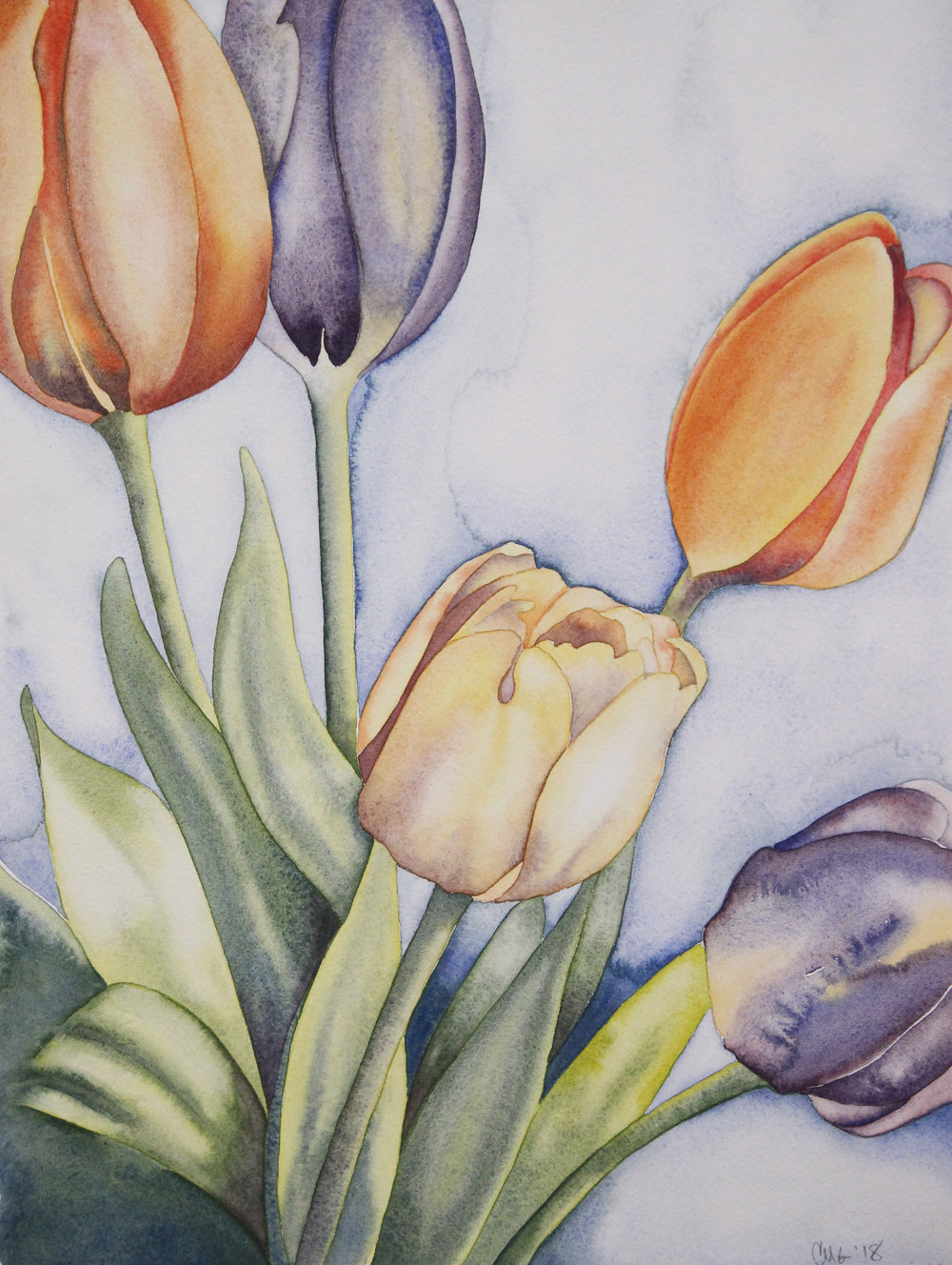 Muted Tulips