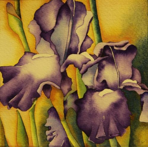 Summer Irises