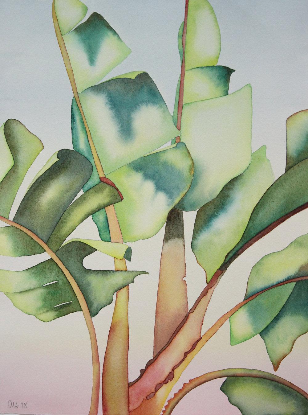 Banana Leaves & Green
