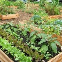 Community Garden Concept