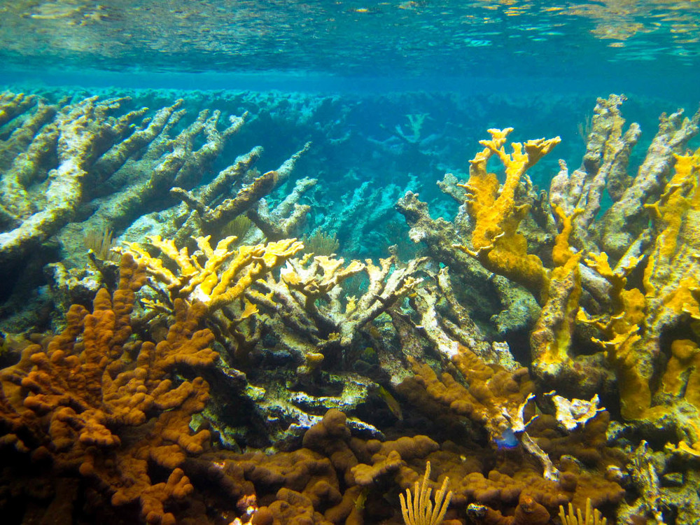 Underwater at Pratt's reef.jpg