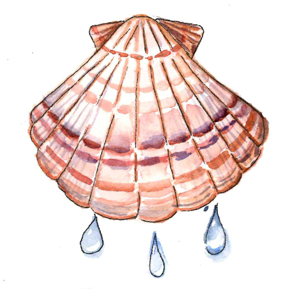 Sea shell water color by Trisha Nibett