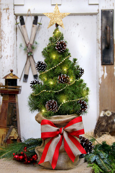 This live Dwarf Alberta Spruce tree arrives with seven frosted and glittered pine cones, a gold-star garland, a star 'Tree Topper' and an LED Light Set. The trendy burlap bag liner covers the tree pot which is secured with a generous matching burlap ribbon for tying into a bow as pictured. All the trimmings are included with the tree for fun, easy decorating.