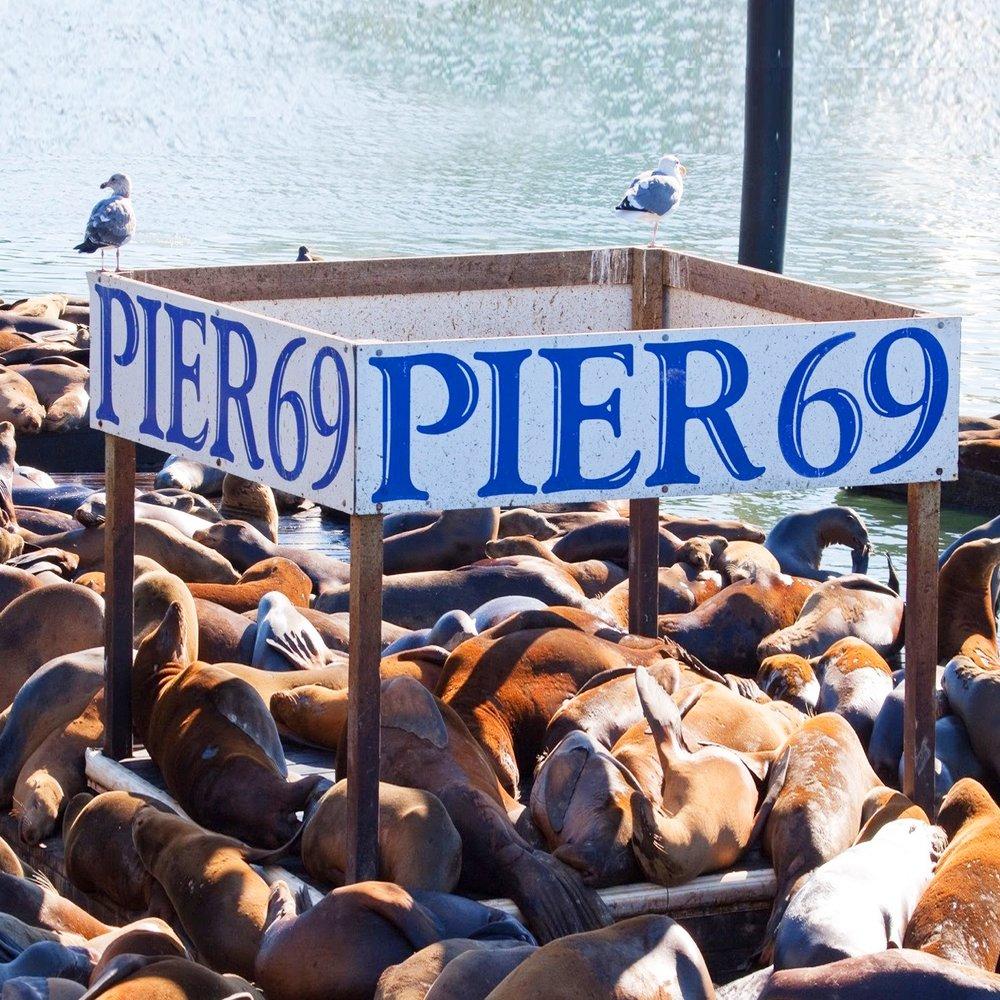 Pier69.jpeg