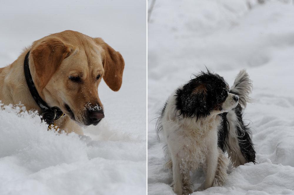 Snow-Day-2.jpg