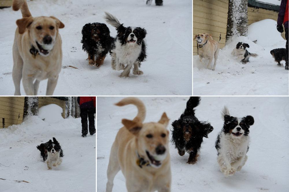Snow-Day-4.jpg