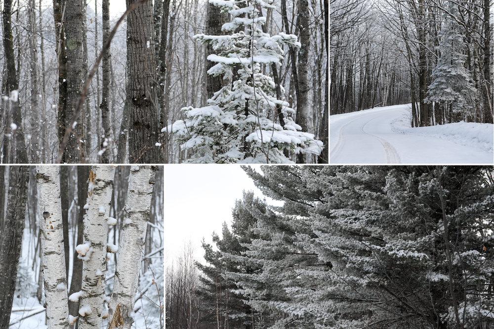 Christmas-Photo-Safari-6.jpg