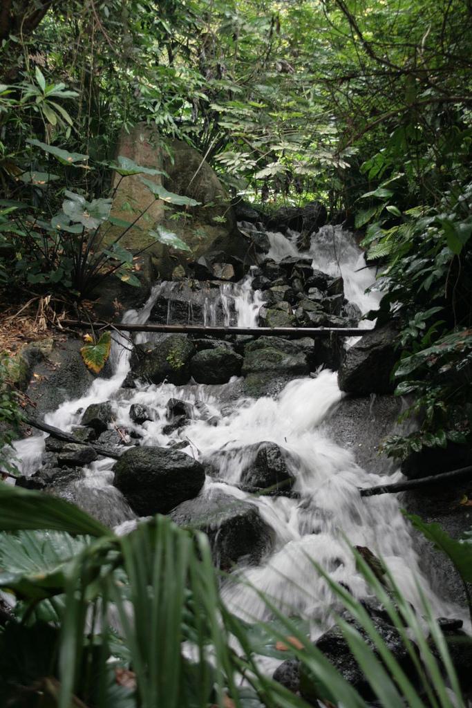 The Eden Project rainforest