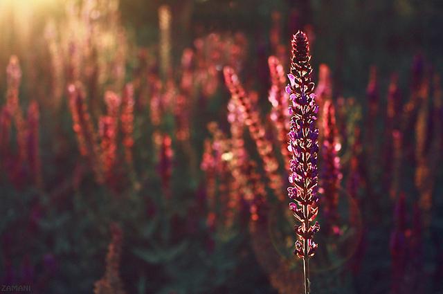 Photo by Sayed Mostafa Zamani/Flickr