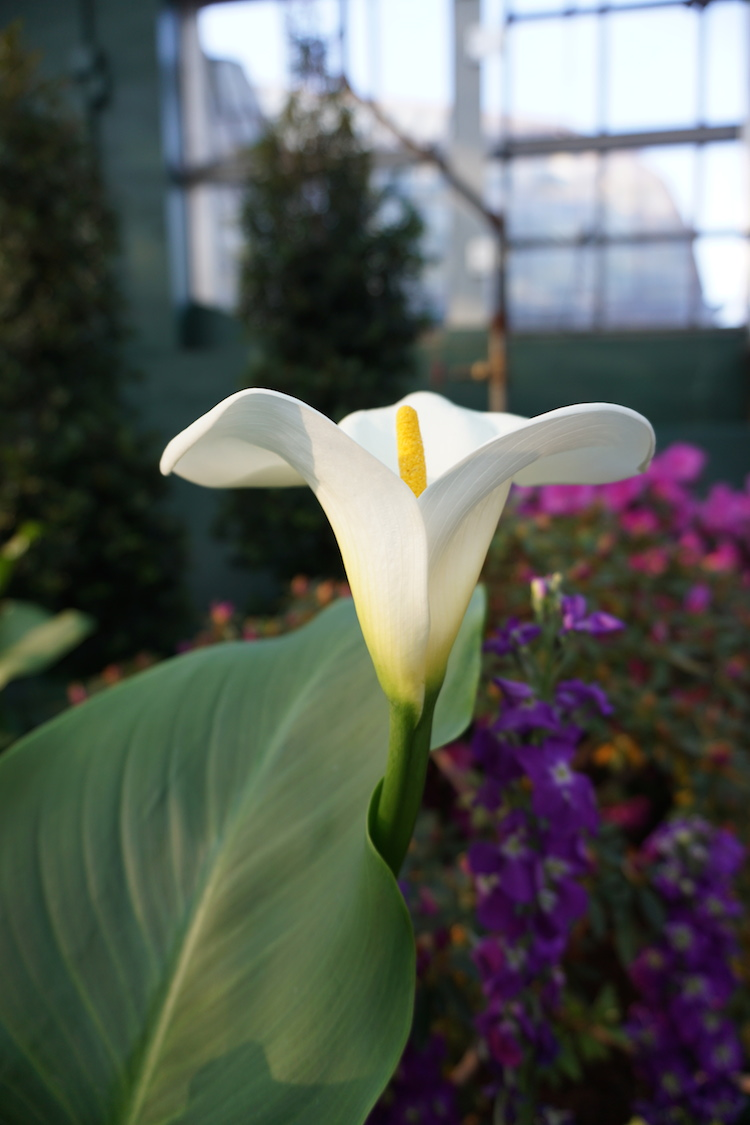 Garfield Park Conservatory | www.paperplatesblog.com