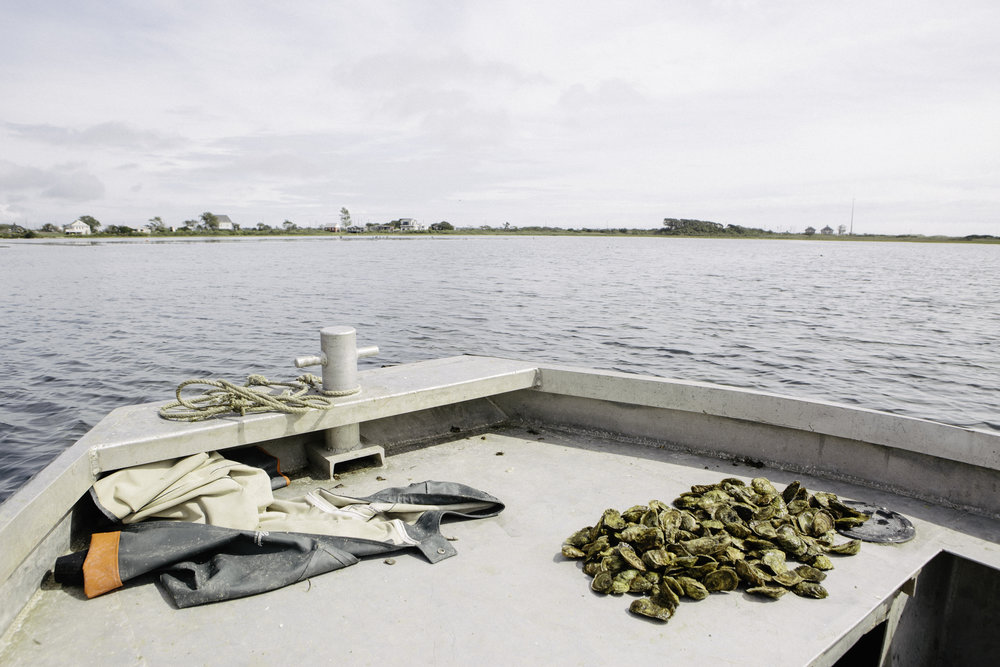 Oysters stay in the water until an order is placed. This batch is ready to be sorted, cleaned, and packaged.