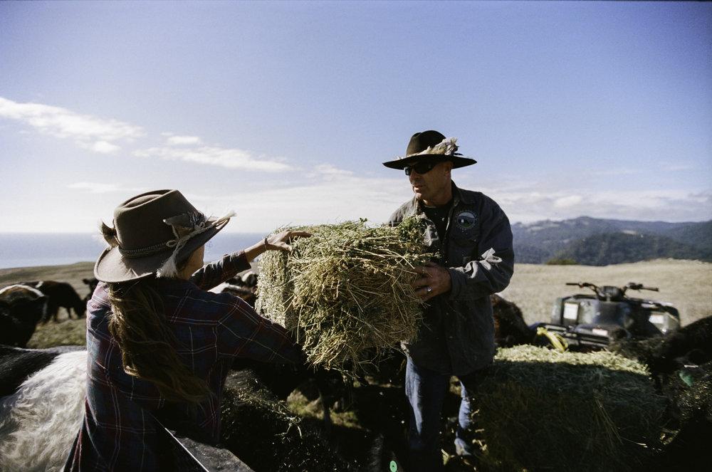 Erik handing hay over to Suey. - Jenner, CA