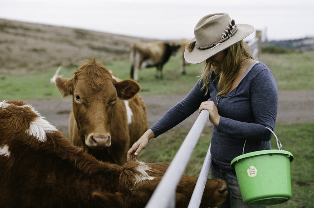 Doniga checking in on their dairy cows. - Half Moon Bay, CA