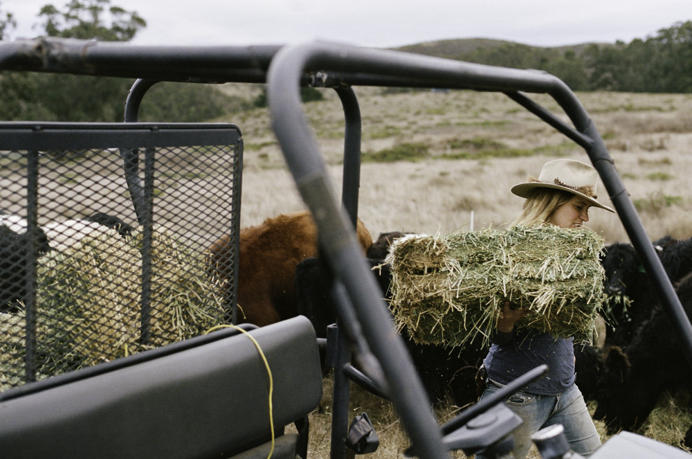 Doniga Markegard unloads hay at their home ranch two hours south of Jenner. - Half Moon Bay, CA