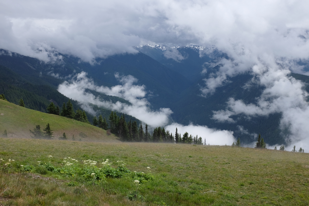 Tuesday was a free day (no practice) so we took the opportunity to drive to Olympic National Park for the day. It was a long day - we left at 8am and returned at 230am - but we saw a lot of amazing things.  This is a view from Hurricane Ridge.  Photo by Shishido.