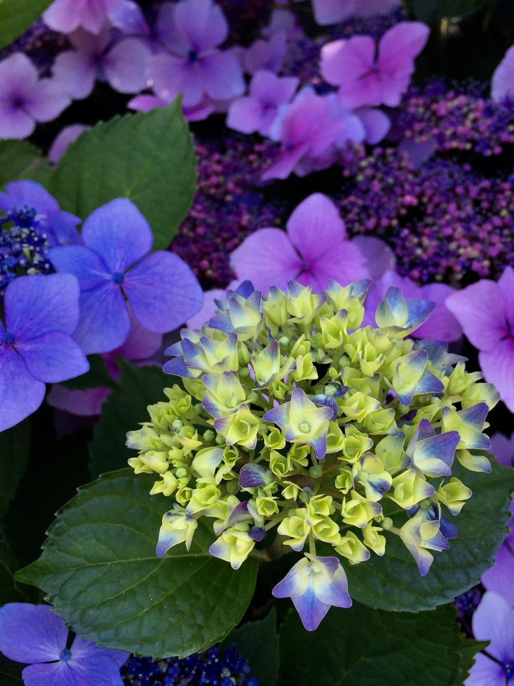 Pretty flowers at Kubota Gardens.  Photo by Shishido.