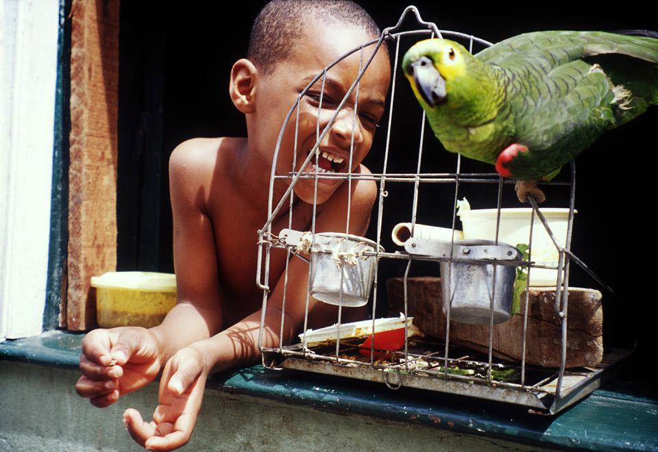 singing parrot , salvador de bahia, brazil 2000