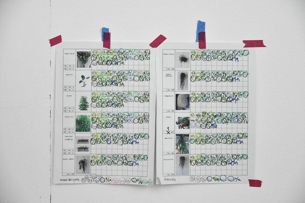 식물 관리표