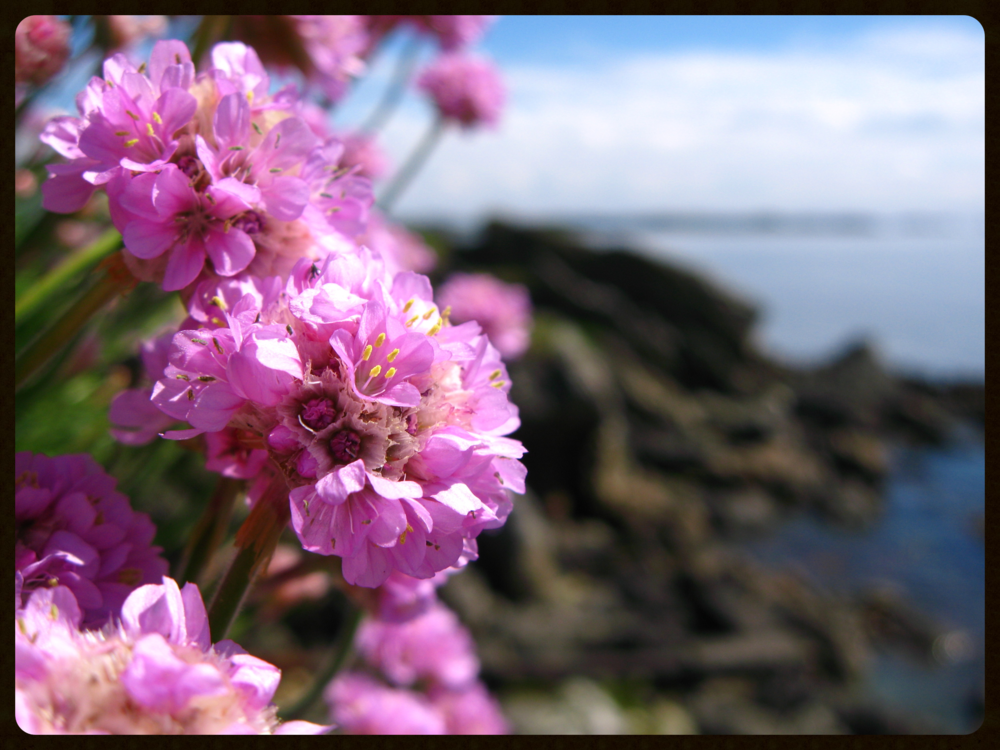 Flowers-at-Ardbeg-Islay.jpg