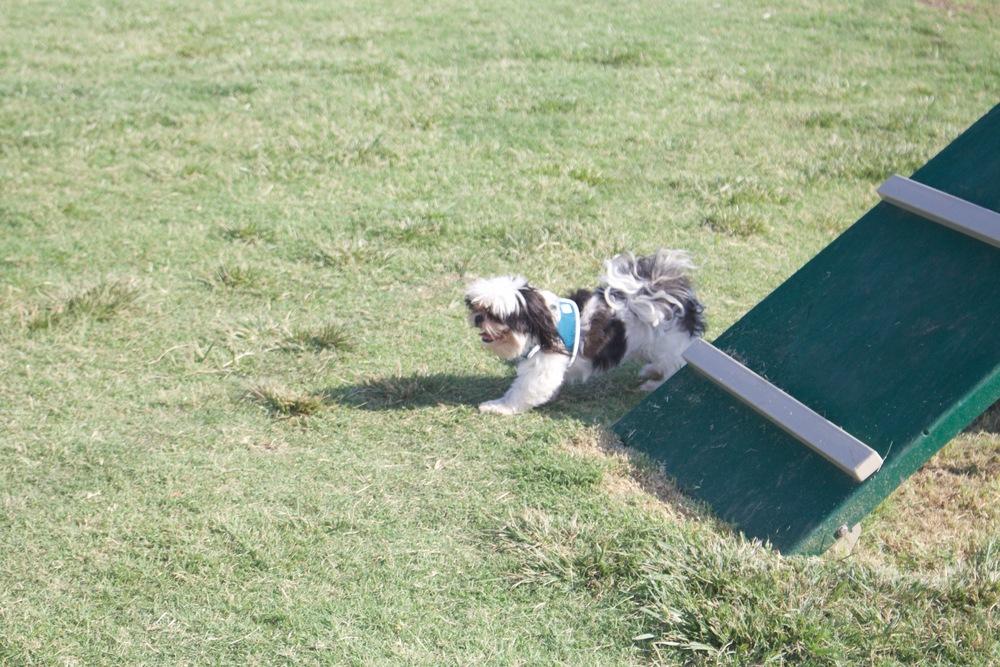45_Dog Park_0017.jpg