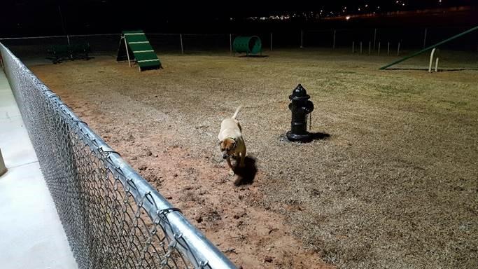 122_Dog Park_2733.jpg