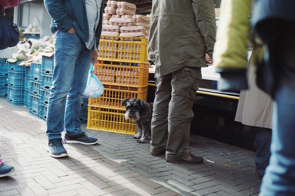 Haagse Markt, Den Haag, Niederlande, Oktober 2017