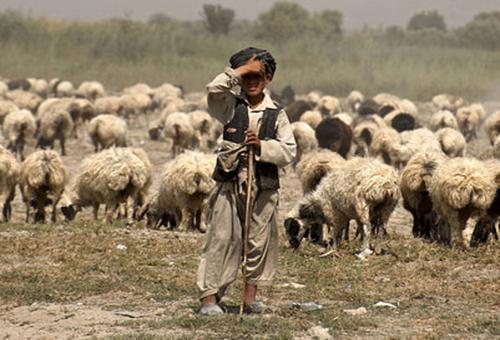 shepherd-from-wikimedia-commons500_phixr.jpg