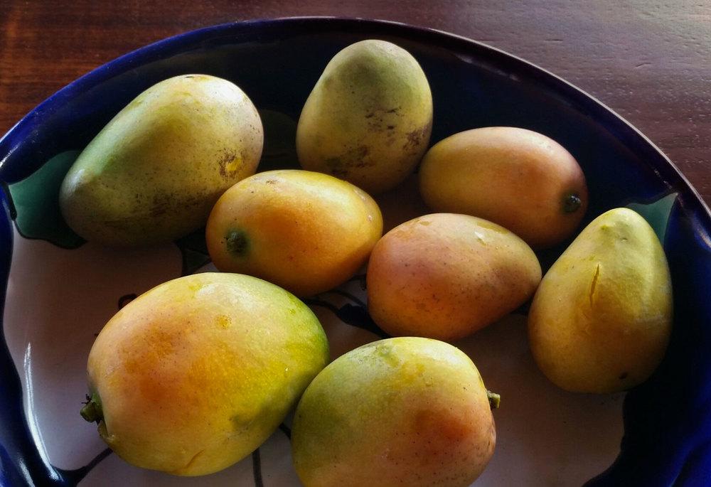 110-ripe-mangoes.jpg