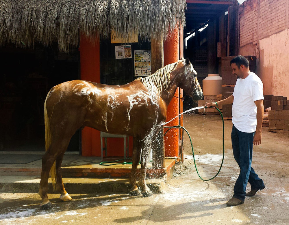 050-man-washing-horse.jpg