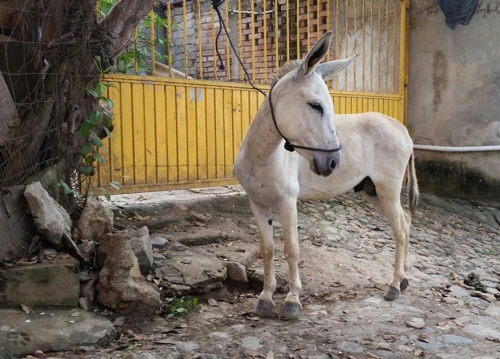 048-Sayulita-donkey.jpg