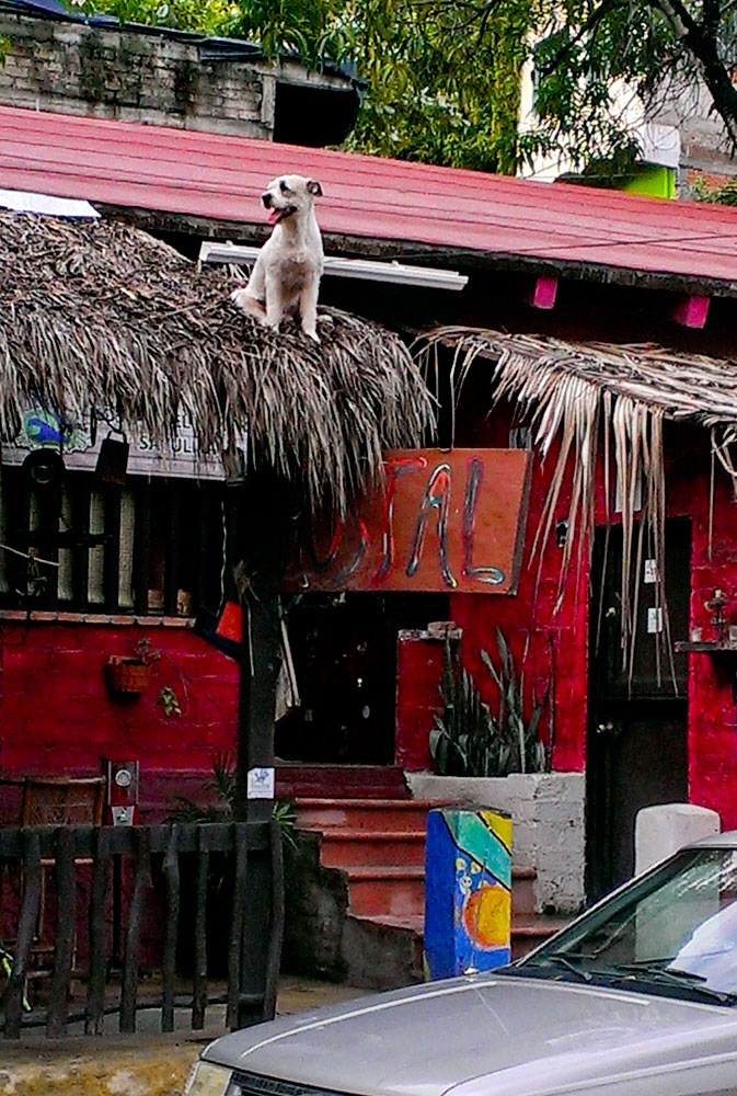 138-Sayulita-dog-on-roof.jpg