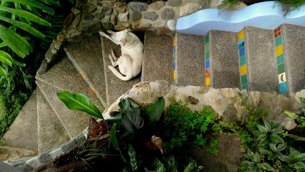 188-Peanut-on-stairs-overhead.jpg